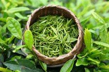 herbaty zielone, czerwone, białe i inne